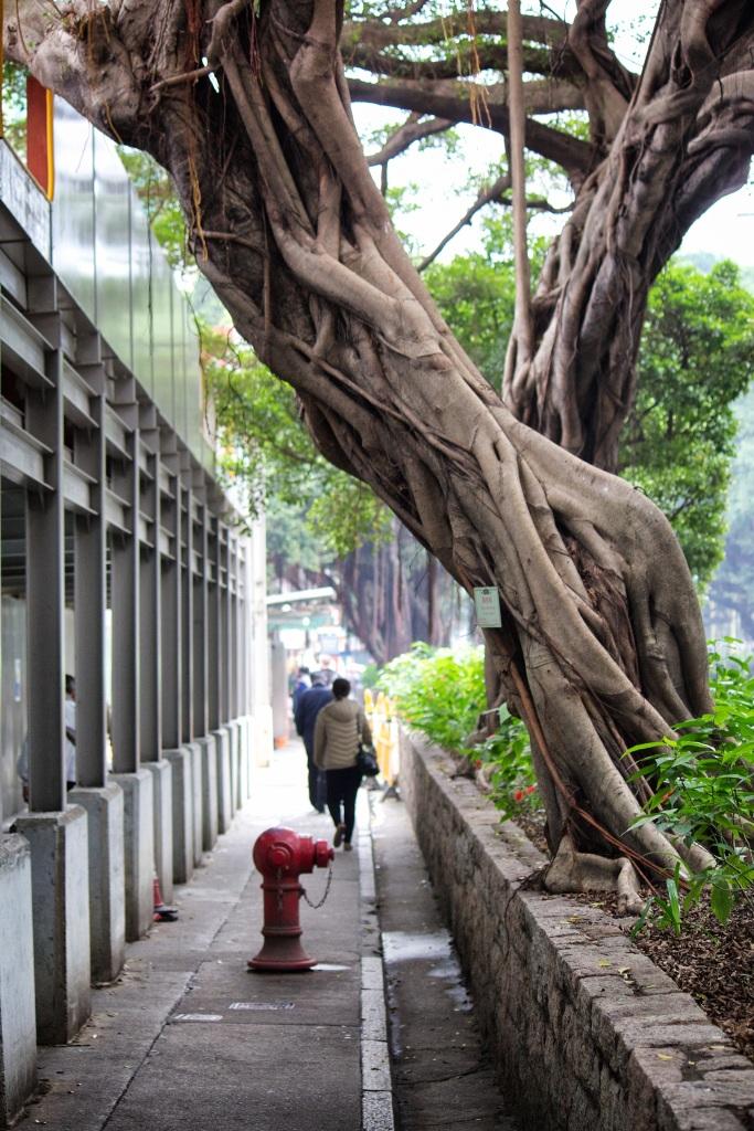 banyan tree alley