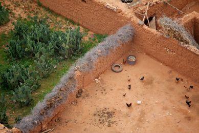 berber cacti