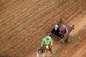 berber horse cart closeup