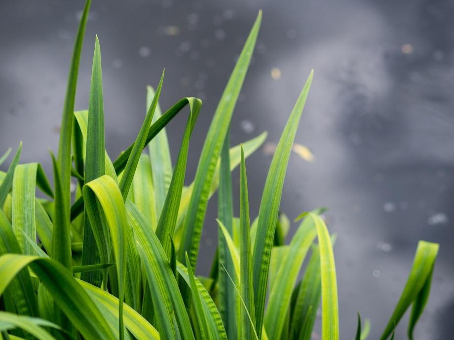 green-blades